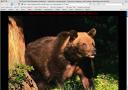AppleProAudio.com site hacked